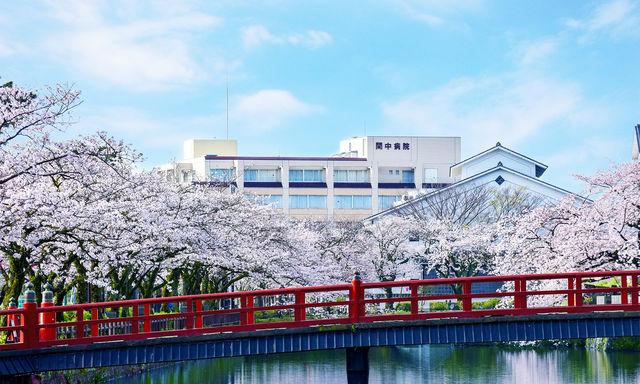 春になると小田原城の桜が満開になります。