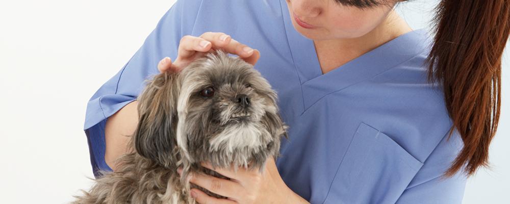 動物看護師 | アニコム ホールディングス株式会社